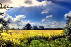 Картинки Поля Небо Рапс Облако Лучи света Природа
