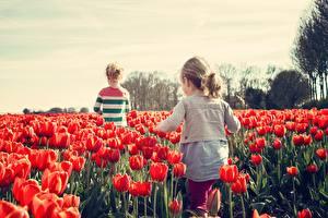 Картинка Поля Тюльпаны Много Девочки Красный Дети