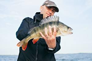 Картинка Пальцы Мужчина Рыбы Ловля рыбы Руки Кольцо Бейсболка Perch животное