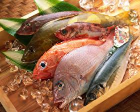 Картинка Рыба Льда Продукты питания
