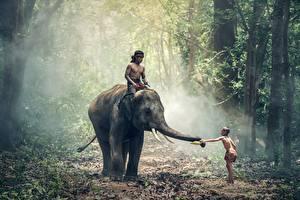 Обои Леса Слоны Азиатки Мальчишка Тумане ребёнок