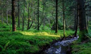 Фотография Леса Реки Норвегия Дерево Ручей Природа