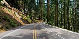 Обои Леса Дороги Деревьев Асфальта Природа