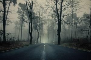 Обои Леса Дороги Деревья Тумане Асфальта Природа