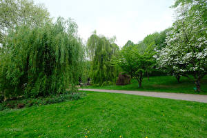 Фотографии Германия Парки Газон Дерево Botanischer Garten Solingen Природа