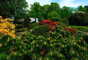 Обои Германия Парки Кусты Botanischer Garten Solingen Природа