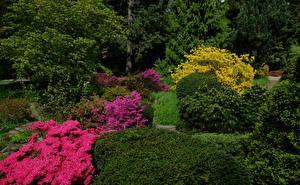 Картинки Германия Парки Рододендрон Кустов Botanischer Garten Solingen Природа