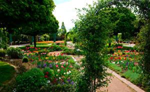 Фотографии Германия Парки Тюльпаны Кустов Botanischer Garten Solingen Природа