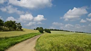 Фотография Луга Дороги Лето Поля Траве Облако Природа