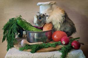 Картинка Морские свинки Овощи Укроп Помидоры Редис Огурцы Чеснок Шапки Еда