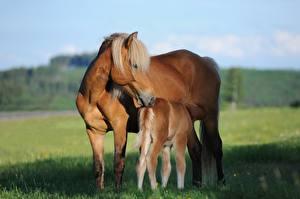 Картинка Лошади Детеныши Траве Вдвоем Животные