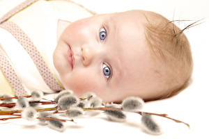 Картинка Грудной ребёнок Взгляд Лицо