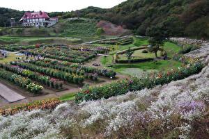 Фото Япония Сады Кустов Akita international dahlia garden Природа