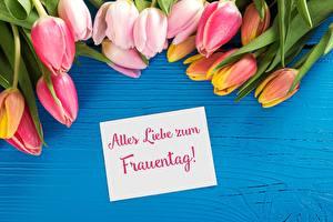 Обои 8 марта Тюльпаны Немецкий Цветы