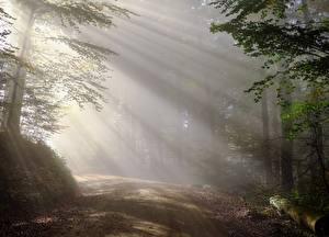 Картинка Утро Леса Дороги Тумана Деревья Лучи света Природа