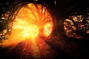 Фотография Утро Рассветы и закаты Леса Деревья Лучи света Природа