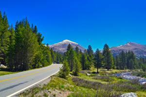 Картинка Гора Дороги Штаты Дерево Траве Montana спортивная