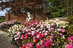 Фото Нидерланды Парки Скульптуры Георгины Кусты Разноцветные Lisse Природа Цветы