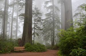 Фотография Парки США Скамейка Деревья Тумана Калифорния Sequoia Природа