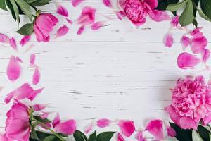 Обои Пионы Лепестки Шаблон поздравительной открытки Розовый Цветы