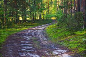 Обои для рабочего стола Дороги Леса Лето Дерево Природа