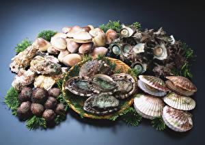 Фотография Морепродукты Ракушки Oysters, Scallops Пища