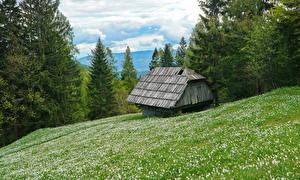 Фотографии Словения Лес Дома Альп Траве Karawanken Природа