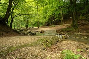 Фотографии Камни Леса Мха Ручеек Деревья Природа
