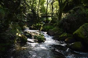 Обои Камни Мха Ручей Природа