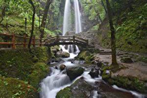 Фотография Камни Водопады Мосты Ручеек Мхом Природа