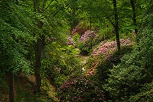 Картинки Швеция Парки Рододендрон Кусты Дерева Sofiero castle park Природа