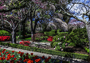 Фото Штаты Сады Весенние Цветущие деревья Тюльпаны Калифорния Filoli Gardens Природа