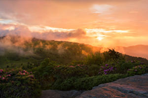 Фотографии США Парк Рассвет и закат Кусты Roan Mountain Rhododendron Gardens Природа