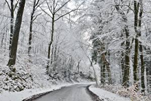 Фото Зима Леса Дороги Снега Деревья Природа