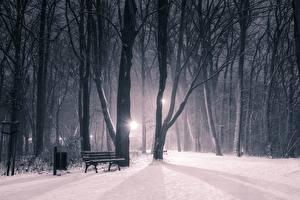 Обои Зима Парк Снегу В ночи Деревья Скамья