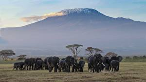 Картинка Африка Парки Горы Слон Много Стадо Мокрые Amboseli National Park, Kenya Животные