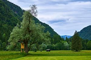 Обои Австрия Горы Луга Деревьев Kessen, Tyrol Природа