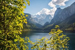 Картинки Австрия Горы Озеро Пейзаж Ветки Скала Dachstein, Gosausee, Gosau Природа