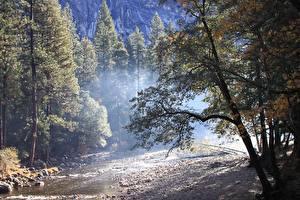 Фотографии Осенние Лес Камень США Парки Йосемити Дерева