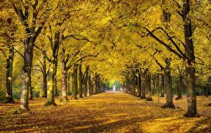 Картинки Осень Парки Деревьев Листва Аллеи Природа