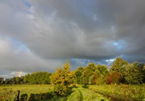 Картинка Бельгия Осенние Деревья Трава Houwaart Vlaams Brabant Природа