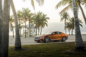 Фотографии Bentley Оранжевых Пальмы Роскошные Continental GT V8 авто
