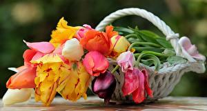 Фото Букет Розы Тюльпаны Натюрморт Корзина Цветы