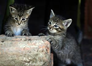 Фотография Кошка Два Котят Животные