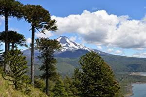Обои Чили Горы Парк Пейзаж Деревья Conguillío National Park, Andes, Araucanía Природа