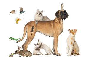 Фотография Собака Коты Кролик Лягушка Попугаи Мыши Белом фоне Аусси Немецкий дог Ящерица