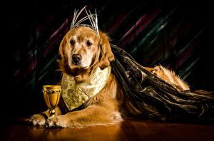 Картинки Собаки Золотистый ретривер Бокалы Животные