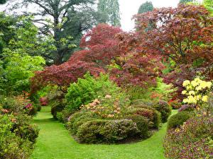 Обои для рабочего стола Англия Сады Кусты Газон Ramster Gardens Surrey Природа