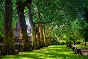 Обои Англия Парки Лондон Деревья Трава Скамейка Города