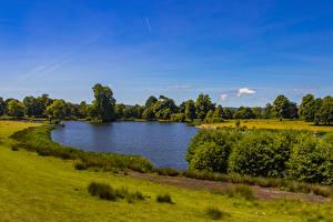 Фотография Англия Парк Пруд Кустов Трава Petworth Park Природа